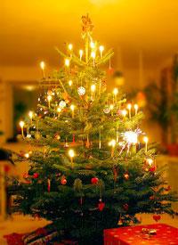 Weihnachttsbaum